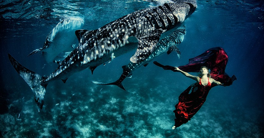 ": : WORLD'S FIRST WHALE SHARK FASHION SHOOT : REAL-LIFE ""MERMAID-WITH-A-CAUSE"" TURNS FANTASY INTO REALITY : :"