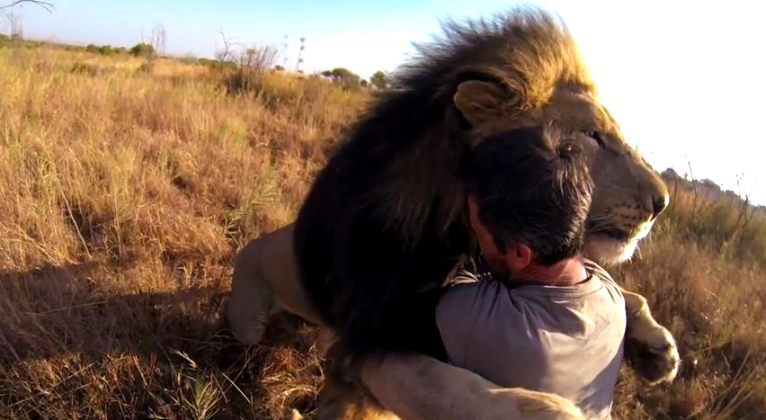 MEET THE LION WHISPERER: IT'S ALL ABOUT MUTUAL RESPECT