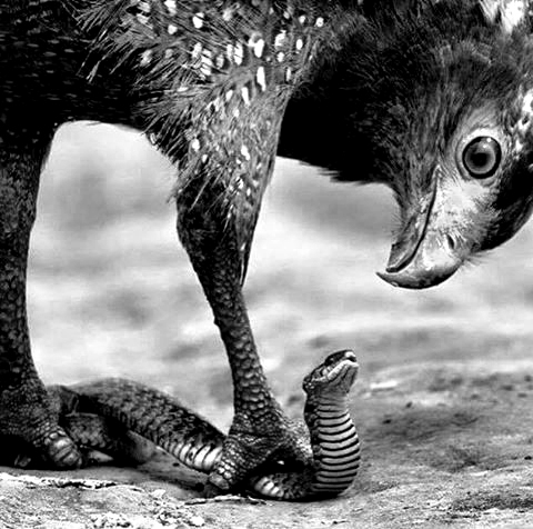 EAGLE vs SNAKE: TAKE YOUR FIGHT INTO THE SPIRITUAL REALM
